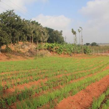 Organic-Farming-1