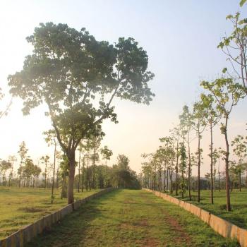 Walk-In-The-Park-2---Hosur-Farmland